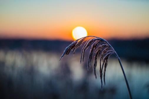 frozen-081