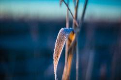 frozen-121