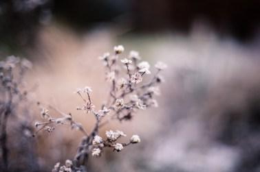 frozen-128