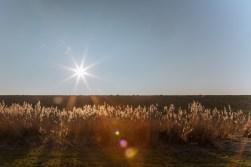 Altes Land, Elbstrand, Bassenfleth, Fotowalk, Landschaftsfotografie