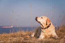Altes Land, Elbstrand, Bassenfleth, Fotowalk, Hundefotografie