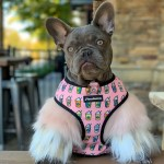 Rare Colors In French Bulldogs