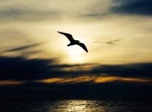 Debaixo das tuas asas quero permanecer