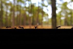 O que eu aprendi observando as formigas