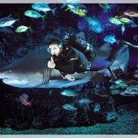 Discover Thailand's Underwater Kingdom Right In the Heart Of Bangkok At Sea Life Bangkok Ocean World In Bangkok City