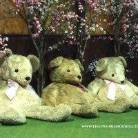 Teddy Bear Invasion In Pattaya!