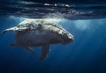 whale btc