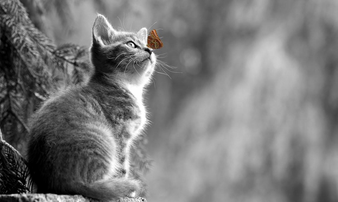 Chat et papillon