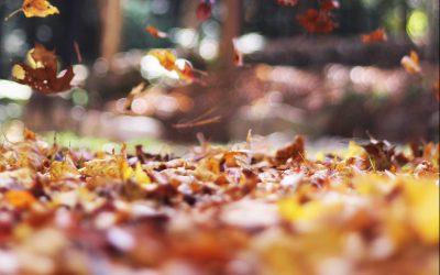 Laissez vos feuilles mortes au sol