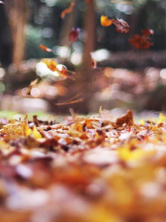 feuilles mortes à l automne
