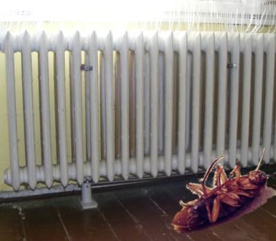 Un gândac a murit de frig în Braşov