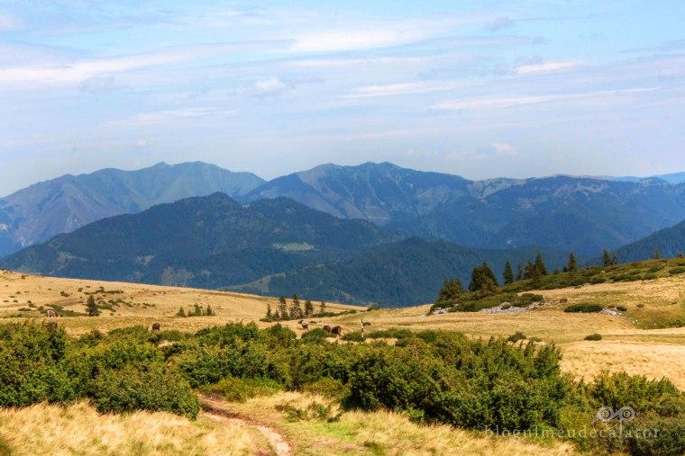 peisaj in muntii rodnei