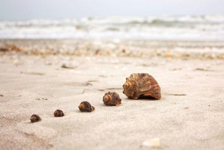 scoici pe plaja vadu