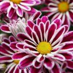 Bunga Terindah di Dunia - Bunga Makro