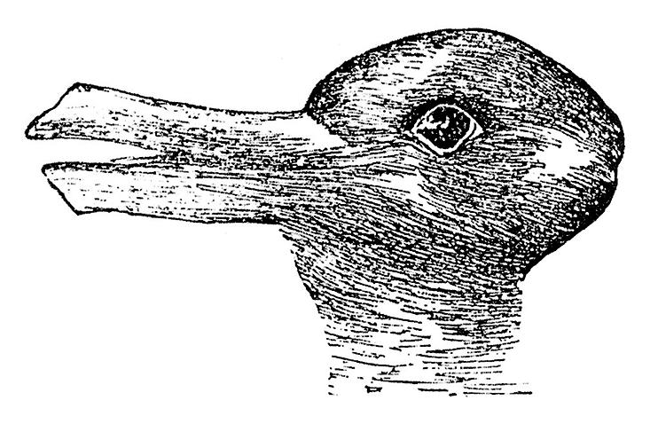 rabbit-duck