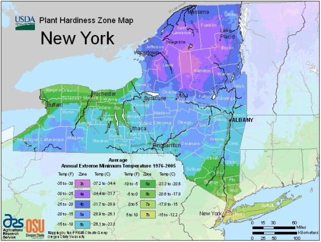 NY map of Low-temp extremes