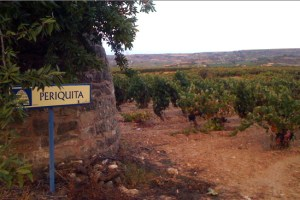 Exopto vines, Periquita