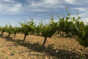 Villar vineyard, Rueda