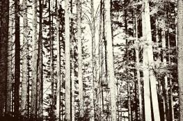 Trees against sun