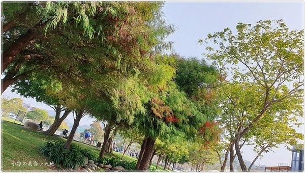 d0205539 9cd1 45ea 9f7c 63b0814afb65 - 台中親子景點║大坑生態公園,落雨松下野餐、放風箏、餵魚,拍照玩樂一把罩,順遊大坑四大特色造型橋梁!