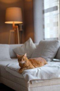 Katze-Emilie
