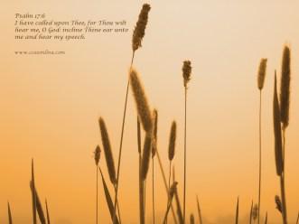 psalm 17.6