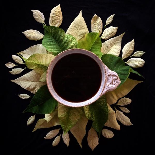 blomsterkaffe julstjärna
