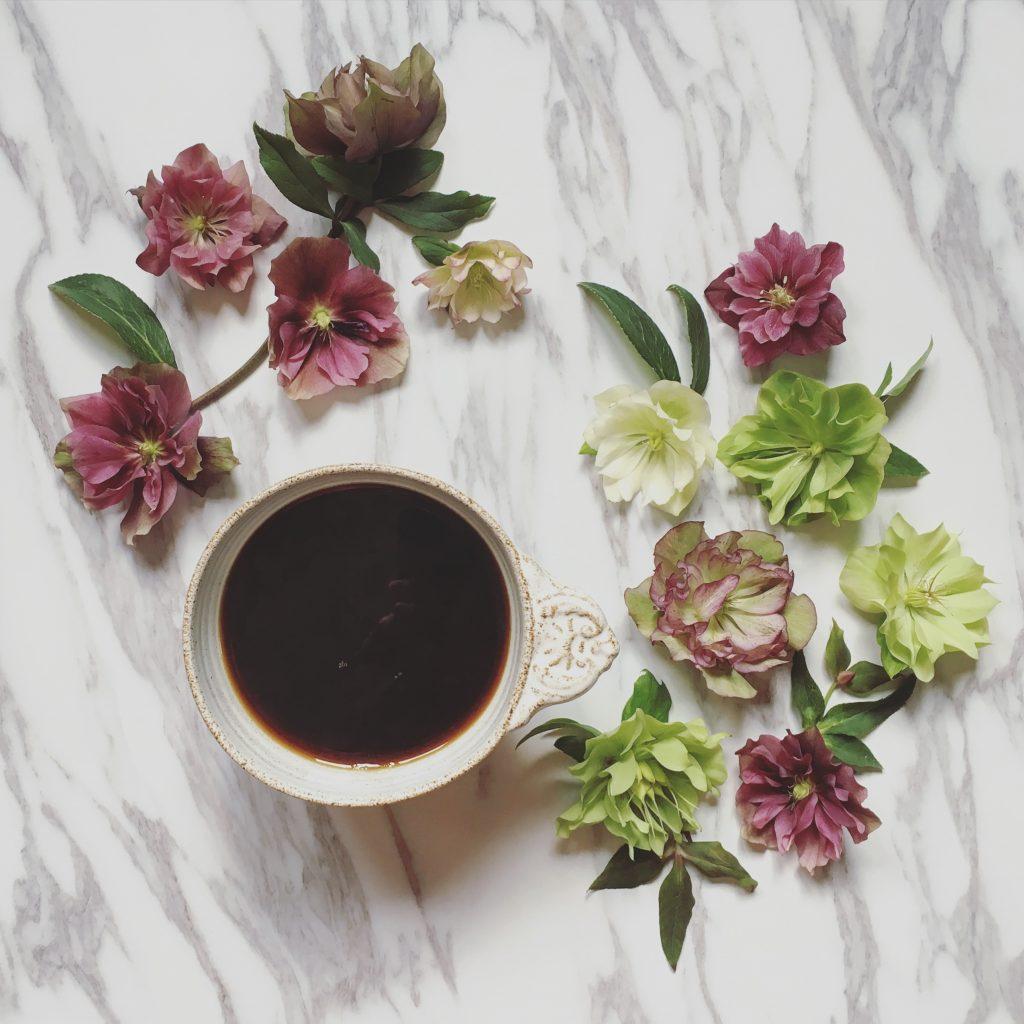 blomsterkaffe-helleborus