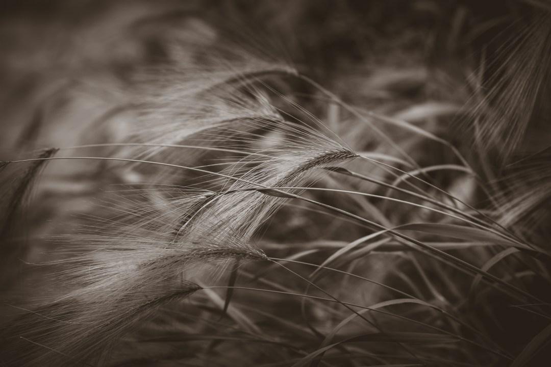 vajande gräs