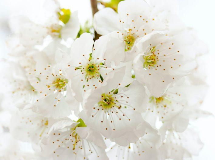 Pear Blossom-flower basket