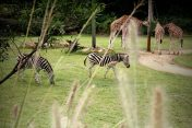Australia Zoo 2013 19