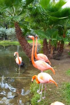 Flamingos - not in Antarctica