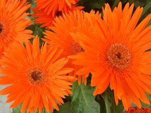 Spring_flowers_048