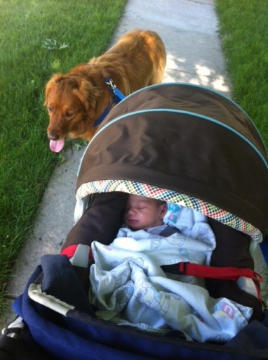 Jada in BOB stroller with Cooper