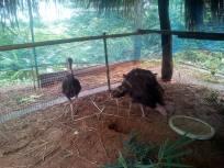 Baby Turkeys 1