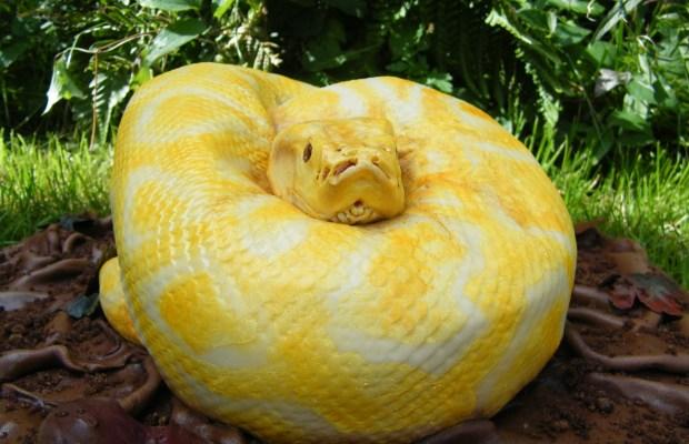 python-cake