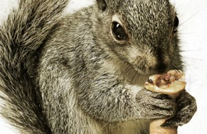 Squirrels_poster-banner