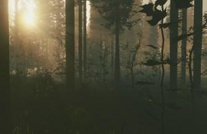 BDB_TheForest_1