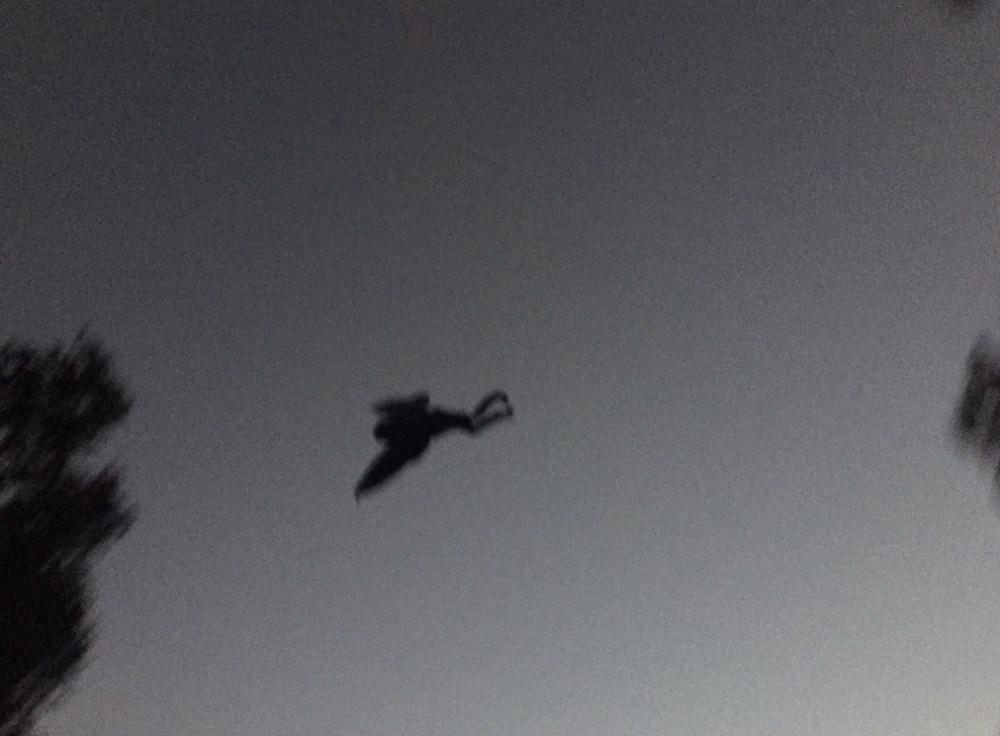 mothman-1