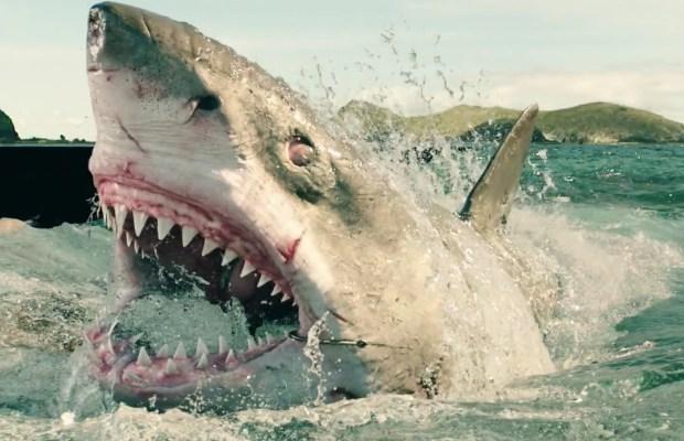 the-shallows-shark