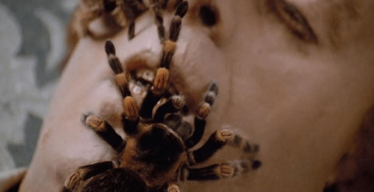 Arachnophobes, Beware: The Most Nightmarish Spider Scenes in Horror - Bloody Disgusting