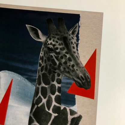 A collage of a black-and-white giraffe swimming in water with some large hot pink triangles and an iceberg. Below the water is a closed-caption style title: (GROANS SOFTLY). The 5 x 7 image is printed on 8 x 10 white paper with a wide border. This is a closeup of the giraffes face.