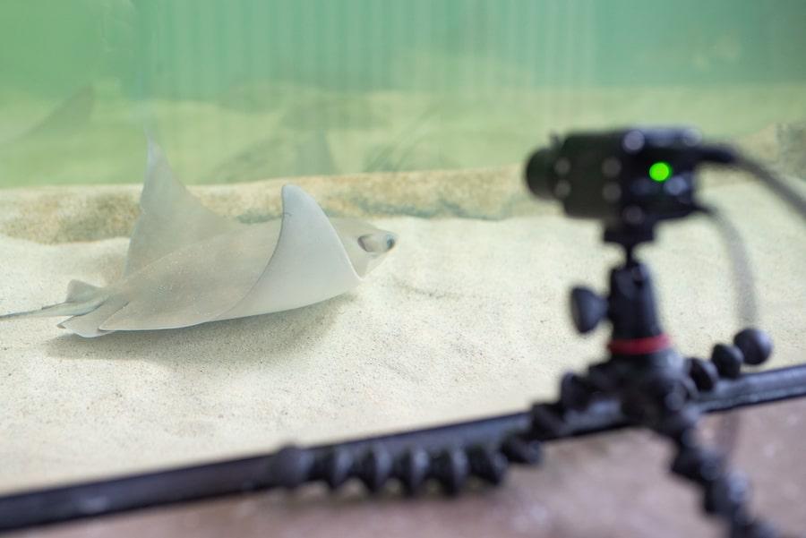 Shark and Ray Live Stream Setup
