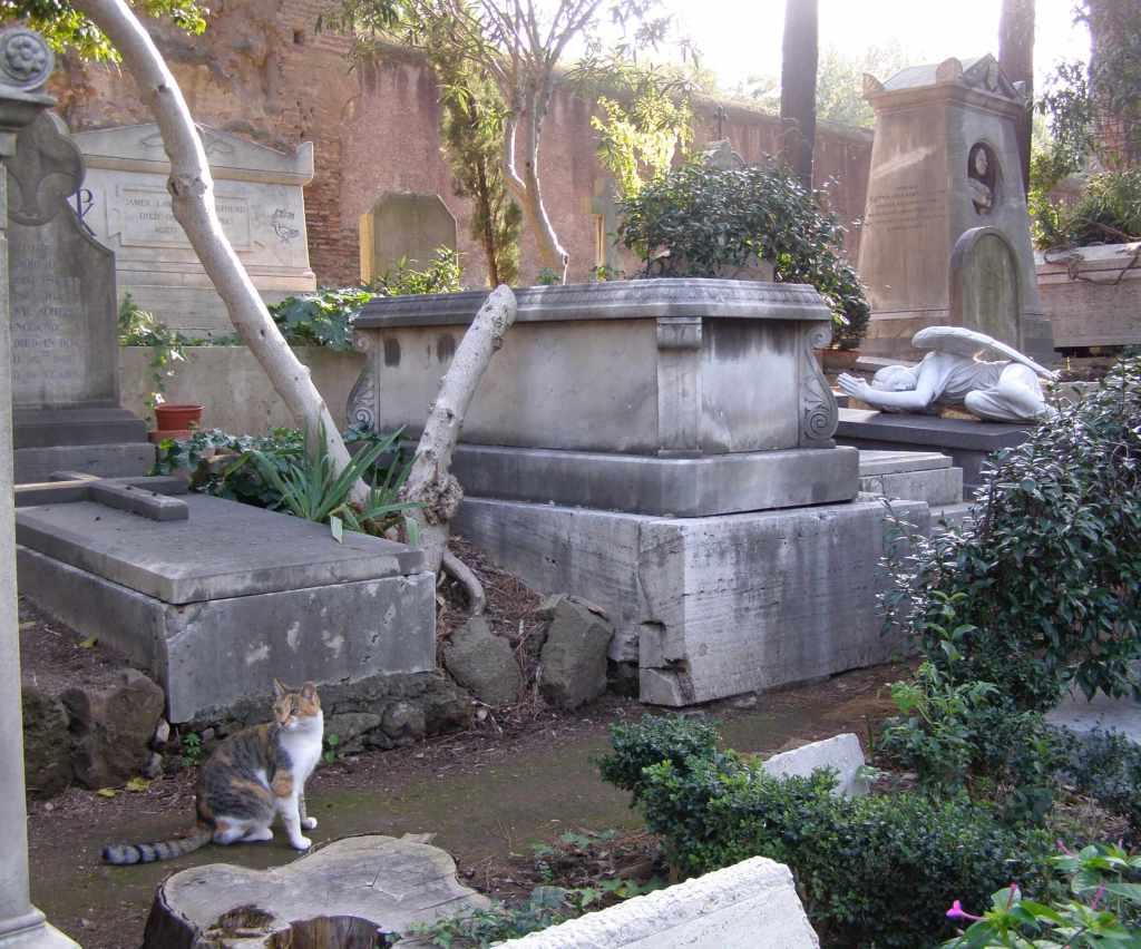 Cats Cimeterio non Catolico Roma