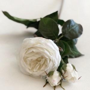 Ella Roses