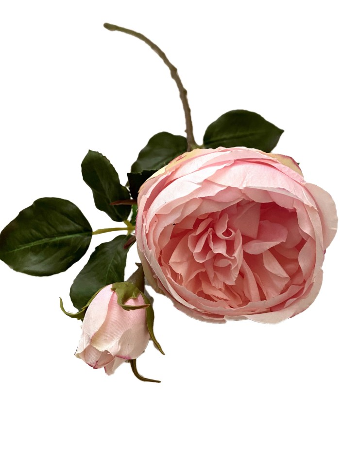 English Pink Rose with Bud