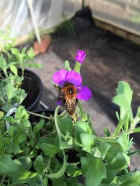 Bee 050416
