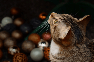 Expectations, Cat, Christmas