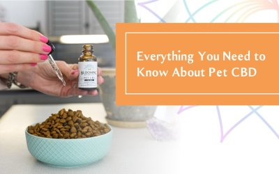 Everything You Need to Know About Pet CBD
