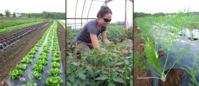 Blooming Glen Farm | On The Farm